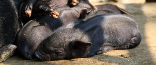 animalbreeding