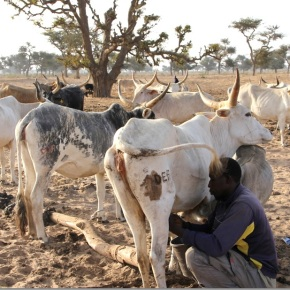 African Dairy Genetic Gains Program: Innovative private-public partnership for sustainable dairy productivity in Ethiopia and Tanzania
